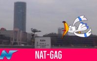 NAT-GAG: Pokémon Go in Real
